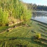 , The Upper Klamath, Rivers For Change